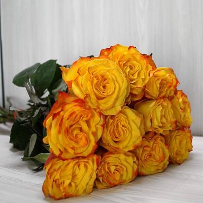 Розы High & Yellow Magic (Хай энд Еллоу Меджик)
