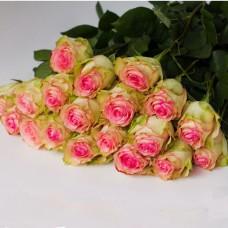 Розы Эсперанса (Esperance)