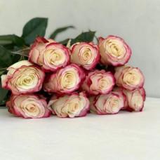 Розы Свитнесс (Sweetness)