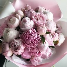 Розовые голландские пионы