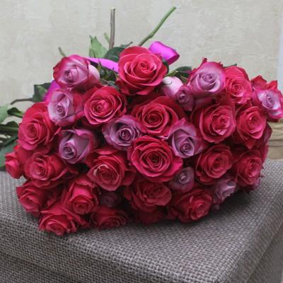 Малиновые розы и розы Дип перпл (Deep Purple)