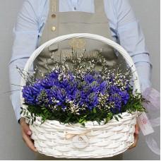 Синие гиацинты в корзине