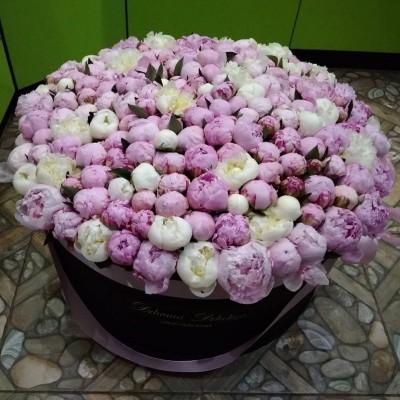 Белые и розовые пионы в цилиндре (XXL) до 199 пионов