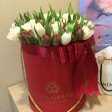 Белые и красные тюльпаны в цилиндре (XS) до 49 шт.