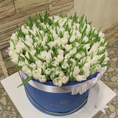 Белые тюльпаны в цилиндре (L) до 149 тюльпанов