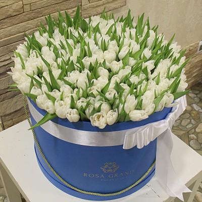 Тюльпаны белые в цилиндре (XL) до 231 шт.