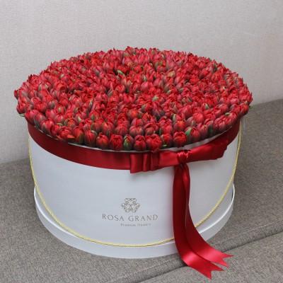 Красные тюльпаны Ред принцесс в цилиндре (XL) до 199 тюльпанов